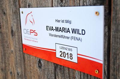 Eva-Maria Wild. Wanderreitführerin. Zirl. Norikerzucht beim Meinrad