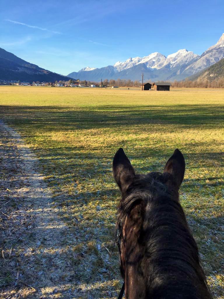 Eva-Maria Wild. Wanderreiten. Norikerzucht beim Meinrad. Zirl in Tirol