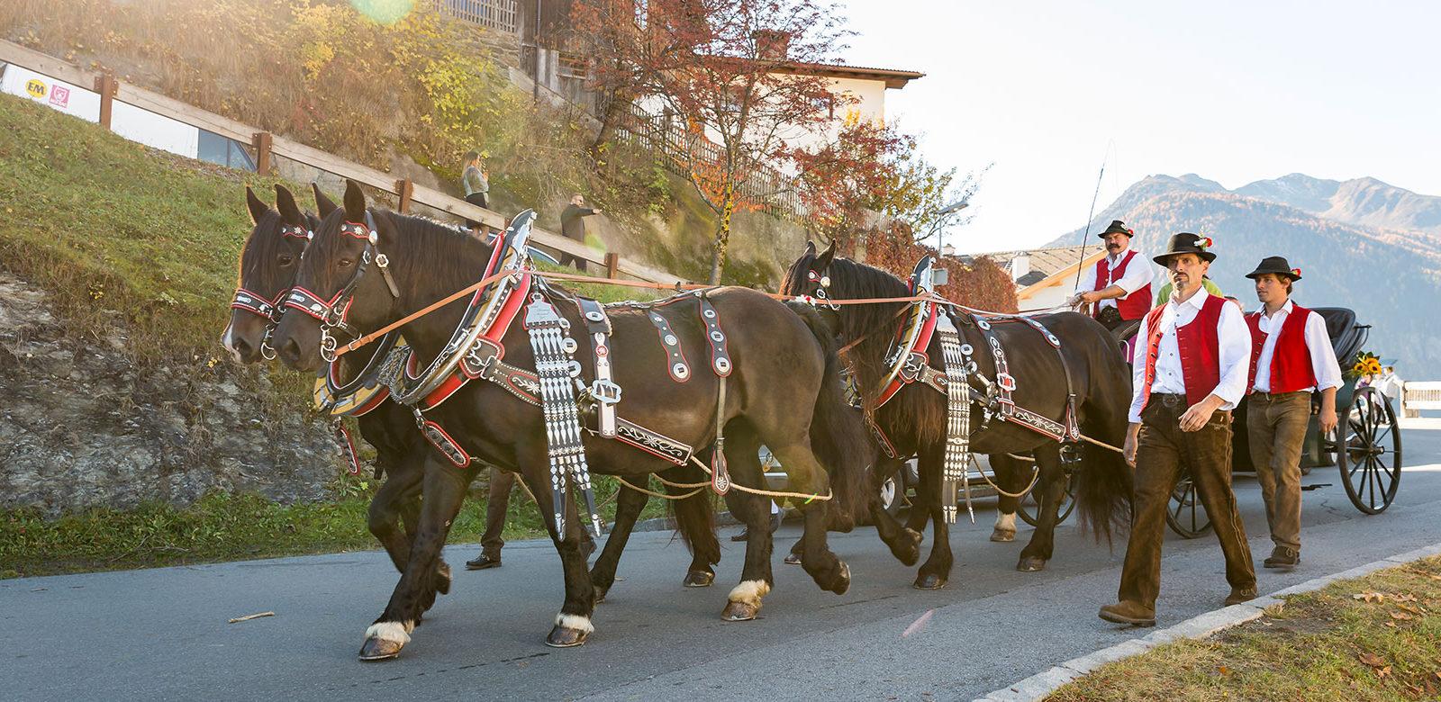 Kutsche Hochzeit Norikerzucht Meinrad Familie Wild Zirl in Tirol